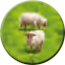 Token HillsSheep Sheep2 C2.png